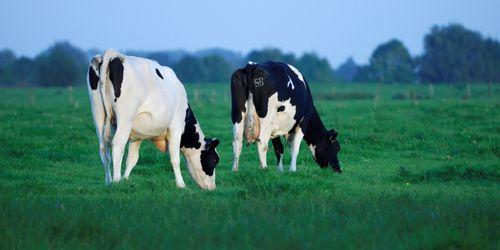 Geschichte Der Milch